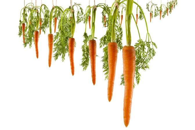 Acquiring Talent in 2019: What Carrots are YOU Dangling?